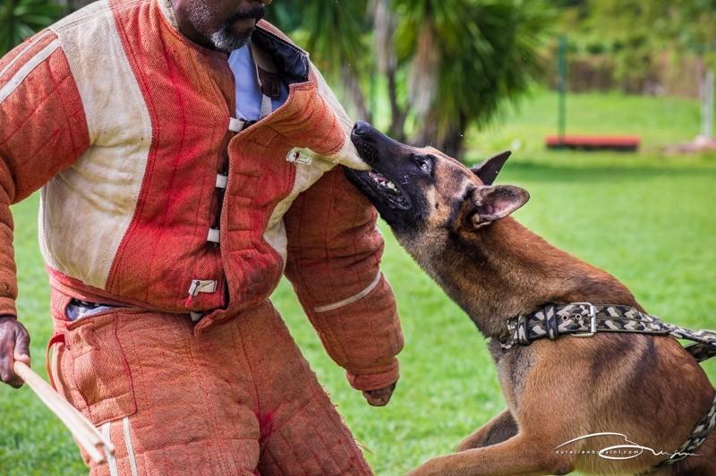 ACS : Maître chien de sécurité